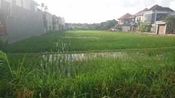 Before Cangu became a tourist area, there where rice paddies everywhere.