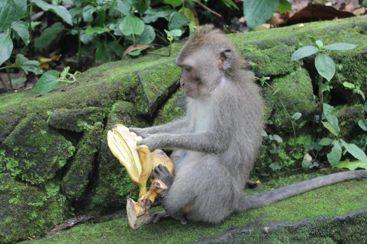 Hmm! Banana